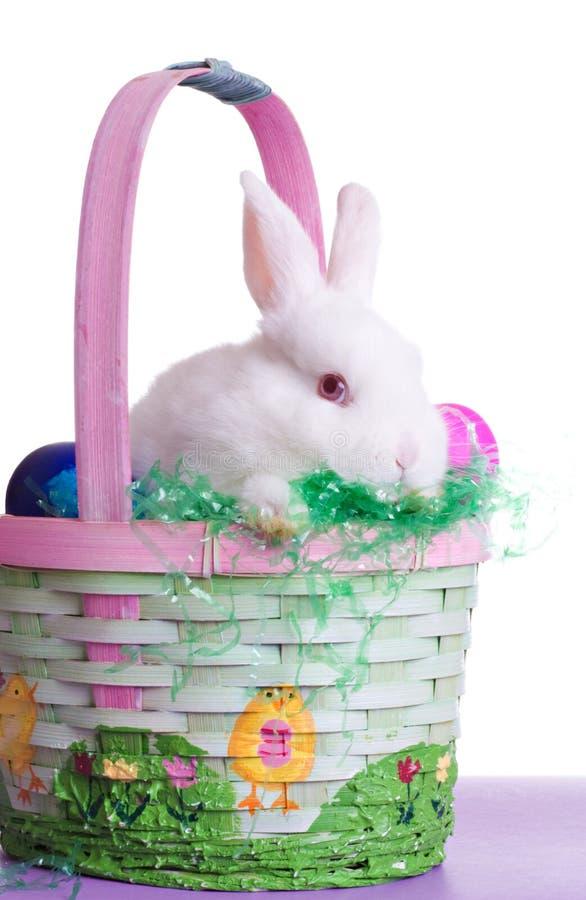 兔宝宝害羞的复活节 免版税库存照片