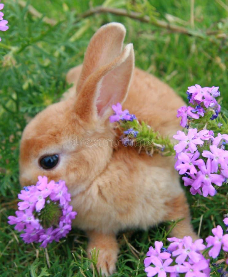 兔宝宝桔子 免版税图库摄影