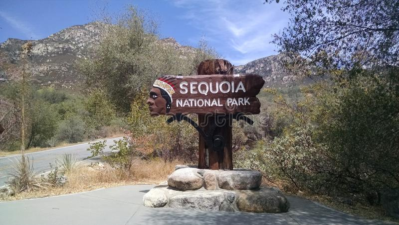 入国家公园美国加州红杉 库存图片