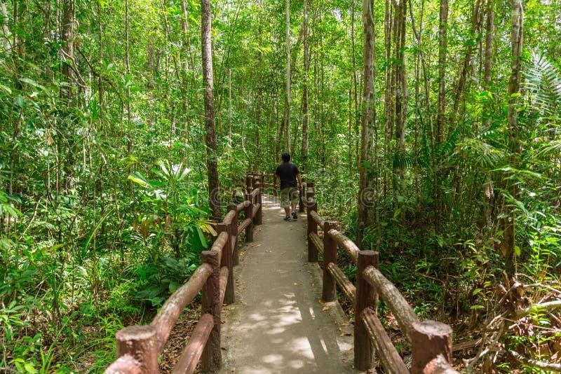 入森林、走道对鲜绿色水池或Emerald湖 库存照片