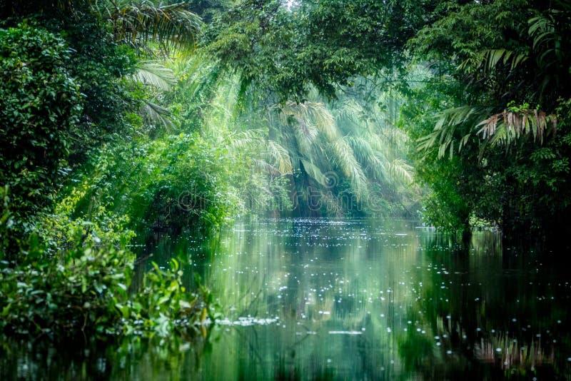 入雨林 库存照片
