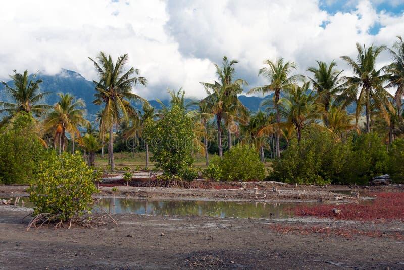 全国西部公园的道路在巴厘岛 库存图片