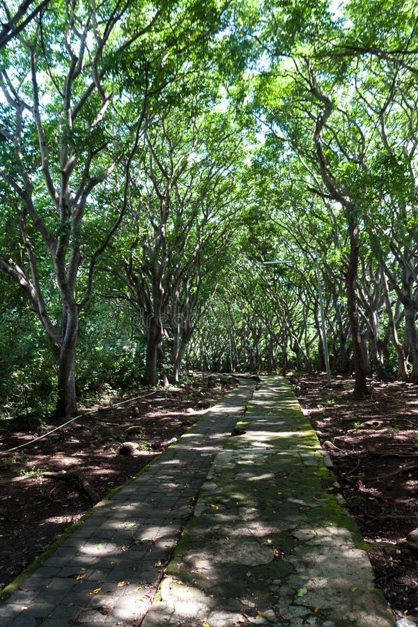 全国西部公园的道路在巴厘岛 免版税库存图片