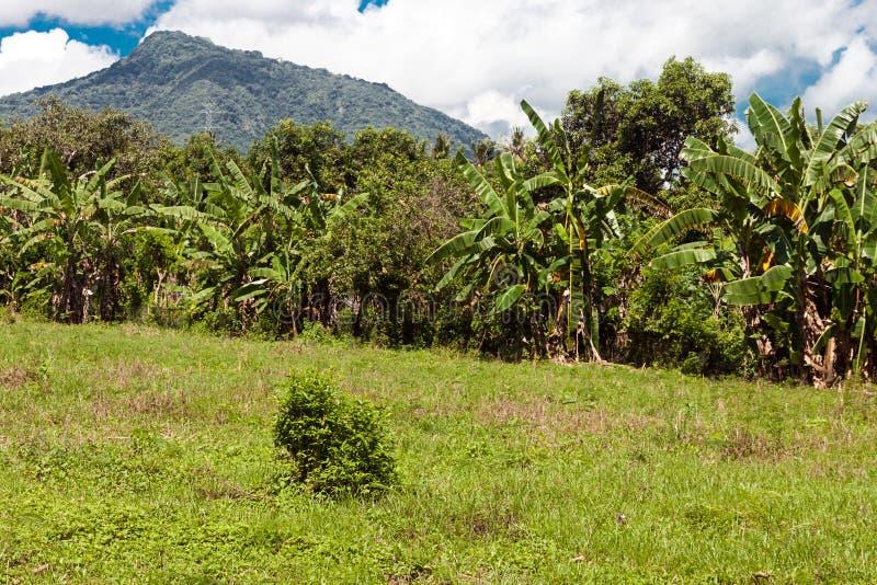 全国西部公园的道路在巴厘岛 免版税库存照片
