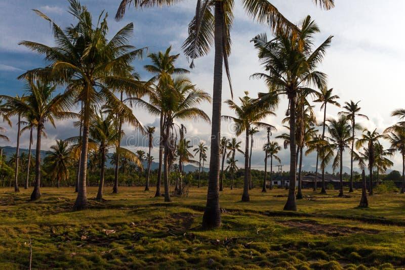 全国西部公园的道路在巴厘岛 库存照片