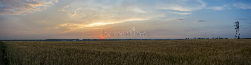 全景、领域、麦子、黑麦、燕麦或者大麦和美好的日落在城市的背景 免版税库存图片