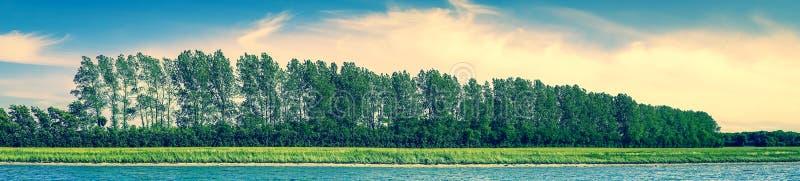 全景与树的海滩风景在行 免版税库存图片