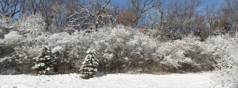 全景冬天积雪的森林,全景或者横幅 免版税库存图片