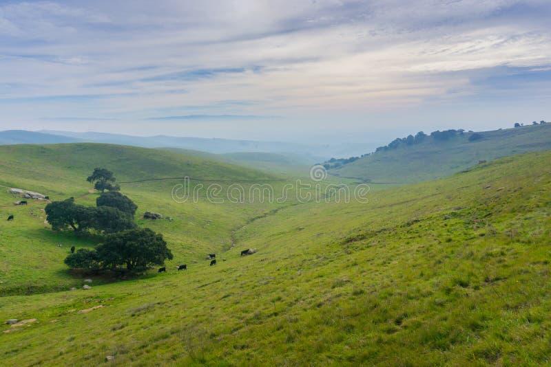 全景在如毛刷高峰地方公园在一阴天,东部旧金山湾,利弗摩尔,加利福尼亚 免版税库存照片
