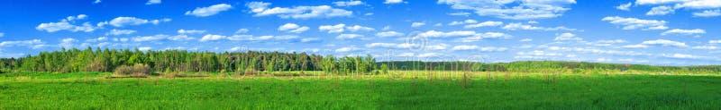 全景春天的森林 免版税库存图片