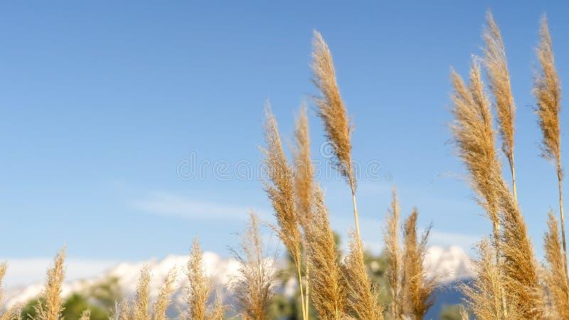 全景框架关闭草有山和天空蔚蓝看法在被弄脏的背景中 免版税库存照片