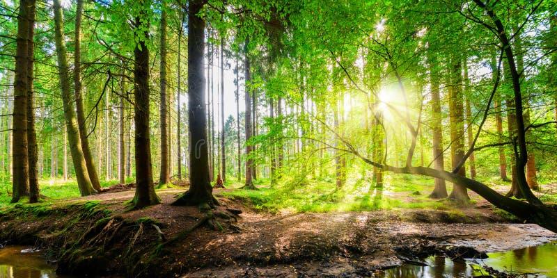 全景森林 图库摄影