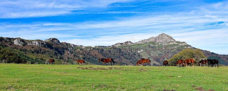 全景步行通过Urkiola,巴斯克地区,西班牙 库存图片