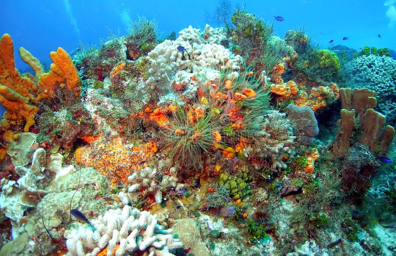 全景珊瑚礁视图显示颜色星系  免版税图库摄影