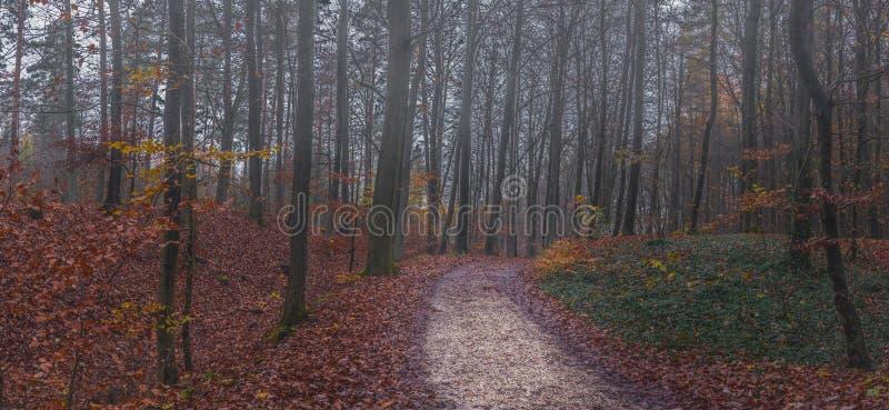 全景秋天有薄雾的森林道路 库存照片