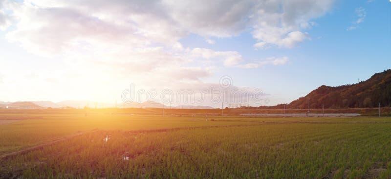 全景米领域和山脉视图风景在日落背景在日本 库存图片