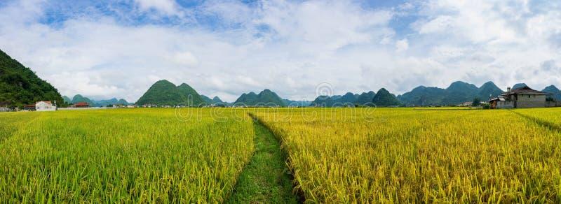 全景米领域在BacSon -越南 免版税库存图片