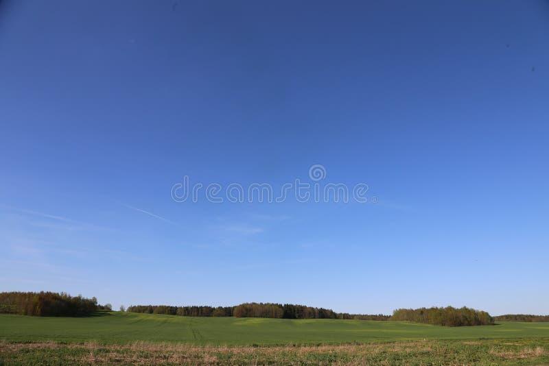 全景绿色领域和蓝天和森林白俄罗斯 库存图片