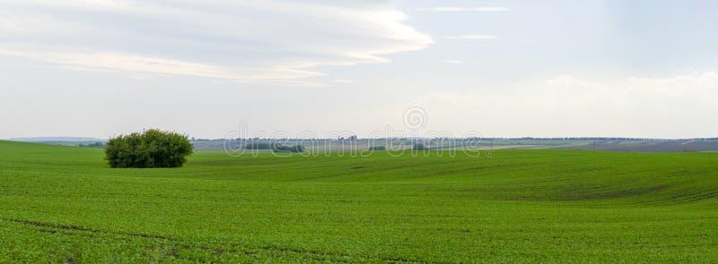 全景美好的绿色领域 免版税库存图片