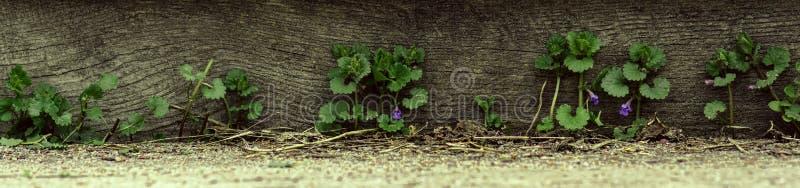 全景草和野花在木背景 免版税库存照片