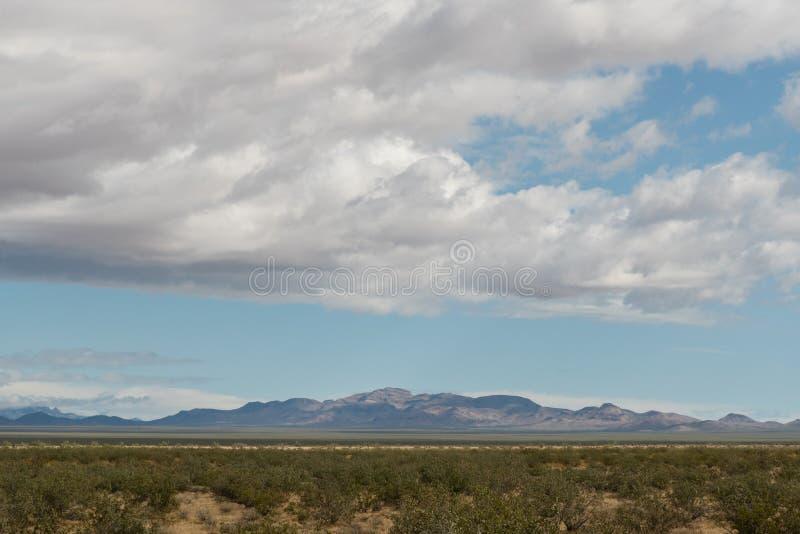 全景莫哈韦沙漠远景在雨以后的春天 免版税库存照片