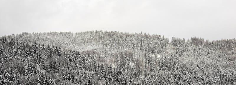 全景雪森林 免版税库存图片