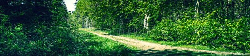 全景风景在丹麦森林里 免版税库存照片