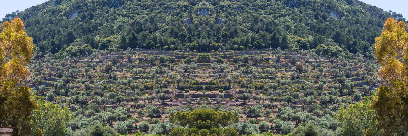 全景,大阳台在马略卡海岛上的领域耕种, S 图库摄影