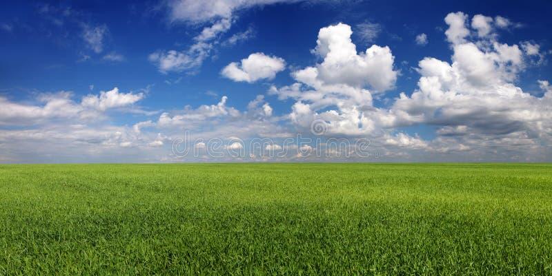 全景 在绿色领域的镇静多云天空 库存图片