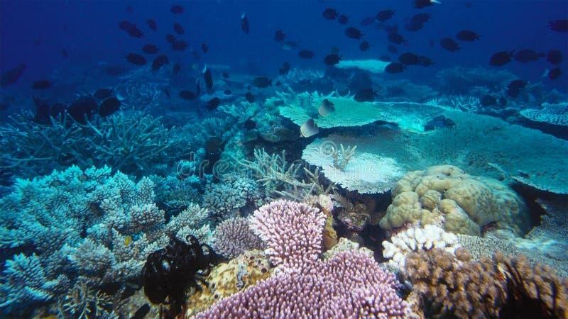 全球性变暖和气候变化杀害的死的珊瑚礁 免版税库存照片