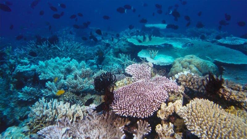全球性变暖和气候变化杀害的死的珊瑚礁 图库摄影