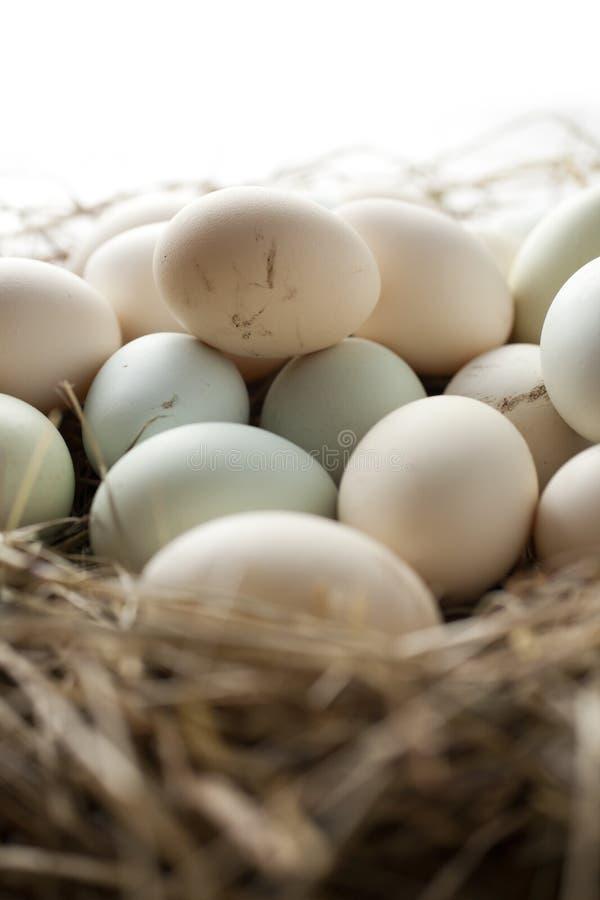 全部在多种颜色的鸡蛋 免版税库存照片