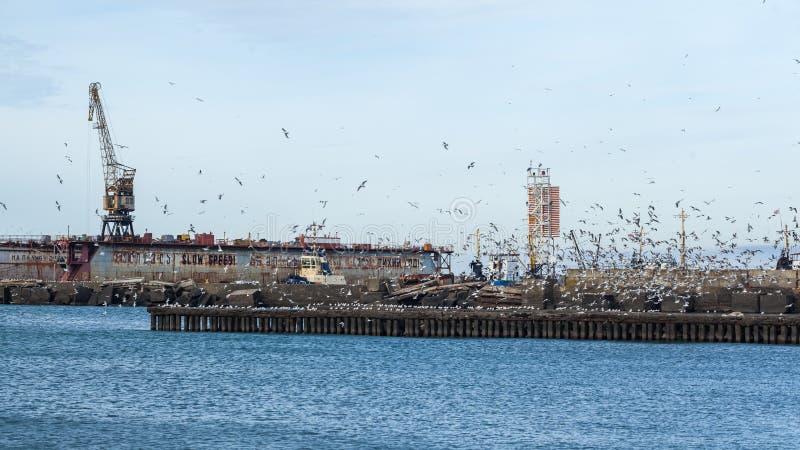 全部在黑海,波季,乔治亚的防堤的海鸥 库存图片