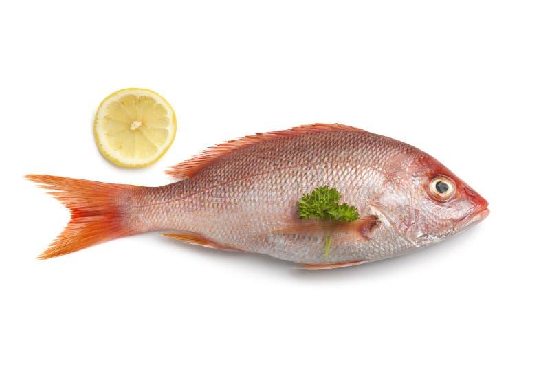 全部新鲜的红鲷鱼 免版税库存图片