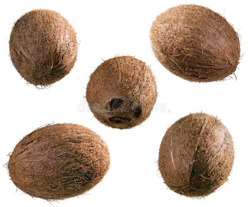 全部的椰子 免版税库存照片