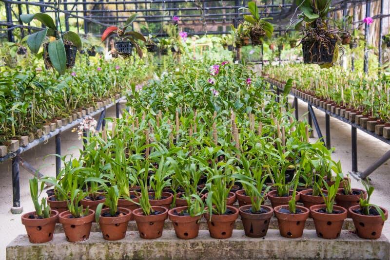 全部罐的植物在玻璃温室里面 库存照片