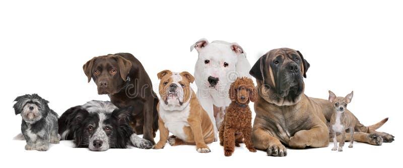 八组狗 免版税库存照片