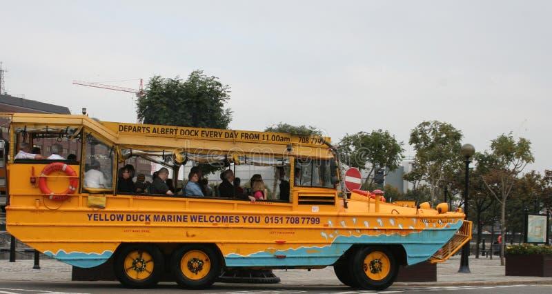 公共汽车观光的利物浦 库存照片