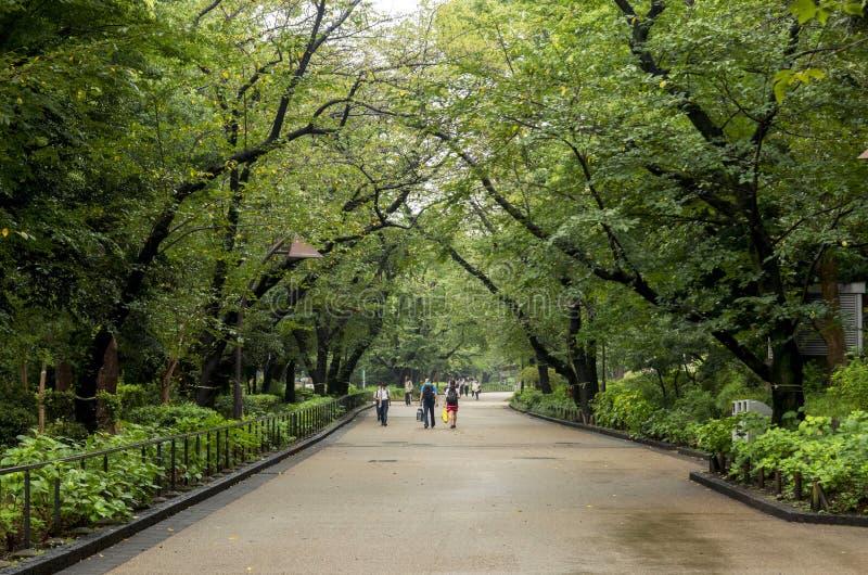 公园人走 免版税图库摄影