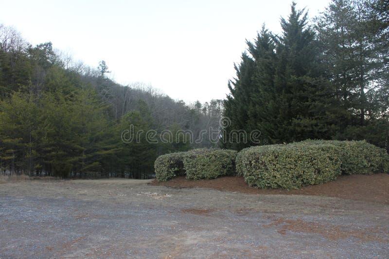 公园和森林的美丽的庭院 库存图片