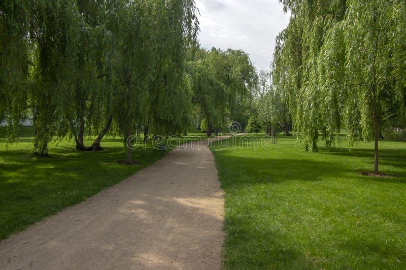 公园在夏天期间在阳光下与长木凳、美丽的柳树胡同和含沙道路 免版税图库摄影