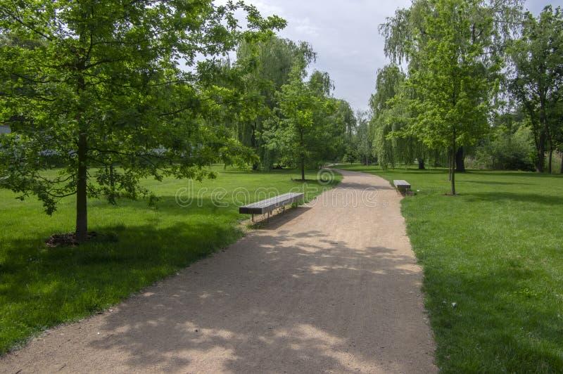公园在夏天期间在阳光下与长木凳、美丽的柳树胡同和含沙道路 免版税库存图片