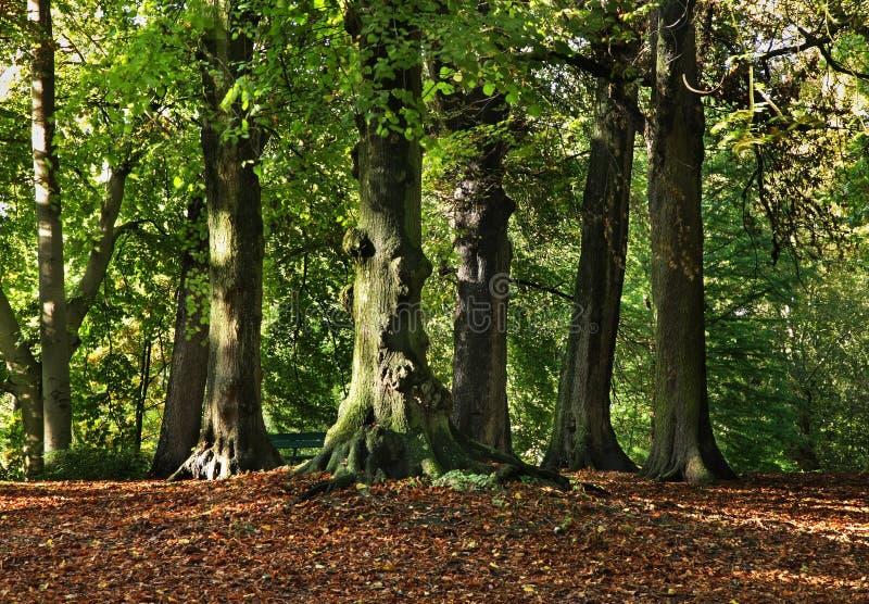 公园在布鲁日 富兰德 比利时 免版税图库摄影