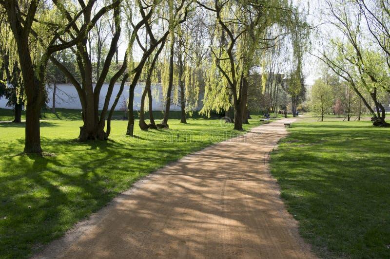 公园在早期的春天,自然对绿色,树阴影,不可思议的片刻的起点轮 图库摄影