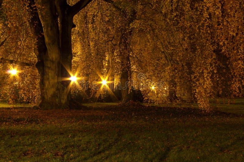 公园在晚上 免版税库存图片