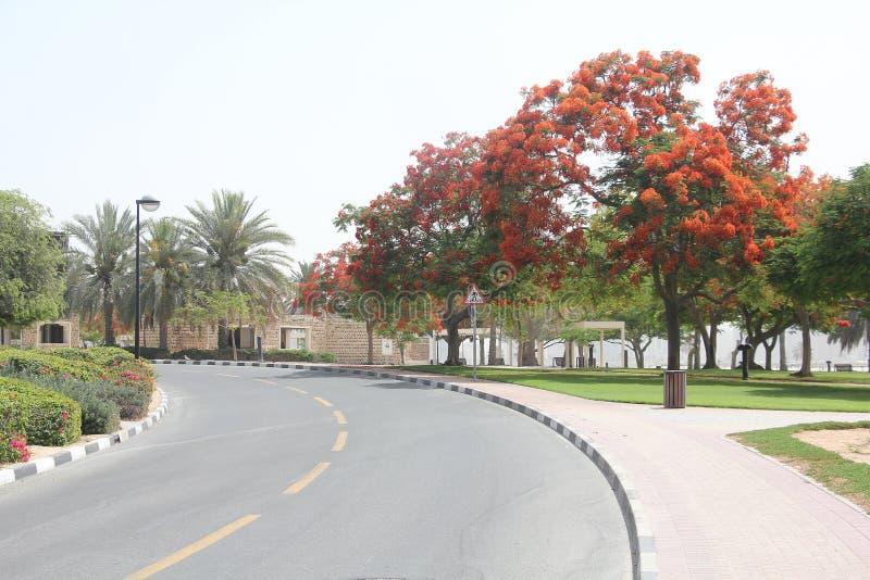 公园在迪拜1 库存图片