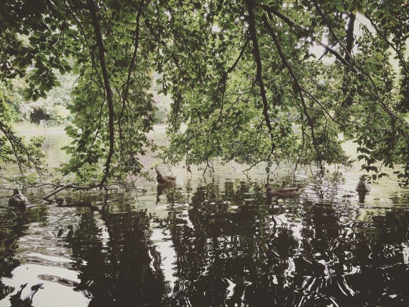 公园在都伯林 图库摄影