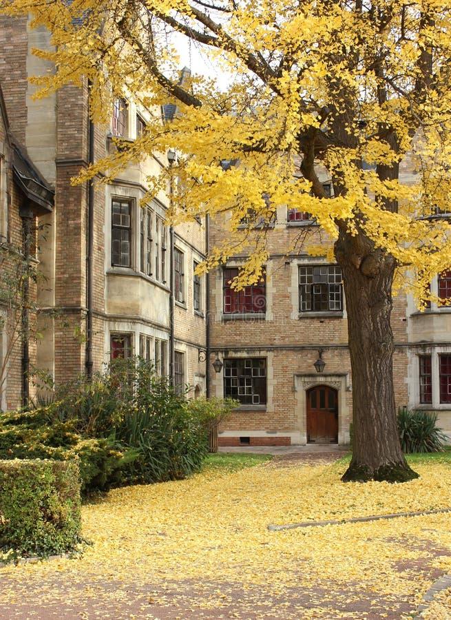 公园在巴黎,秋天 免版税图库摄影