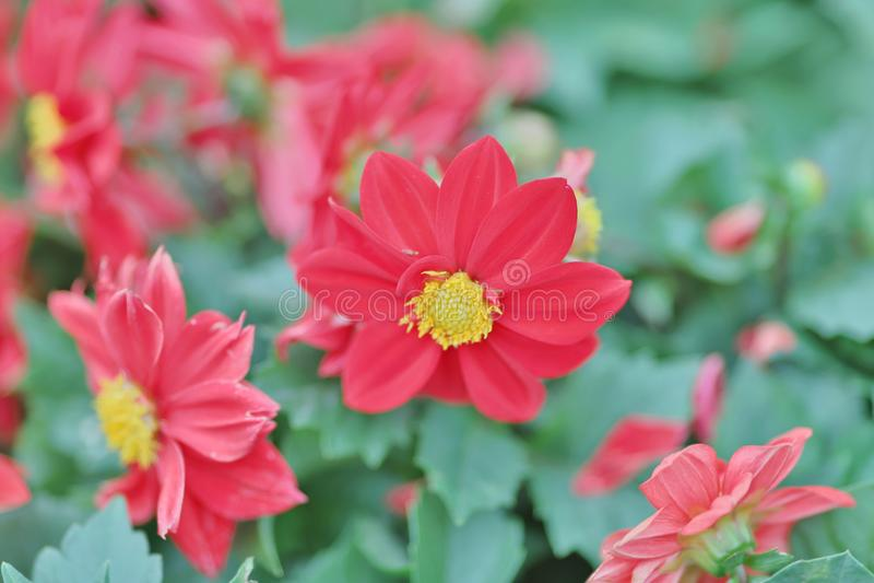 Download 公园春天的开花的花圃 库存例证. 插画 包括有 题头, 环境美化, 开花的, 庭院, 装饰, 五颜六色 - 112732168