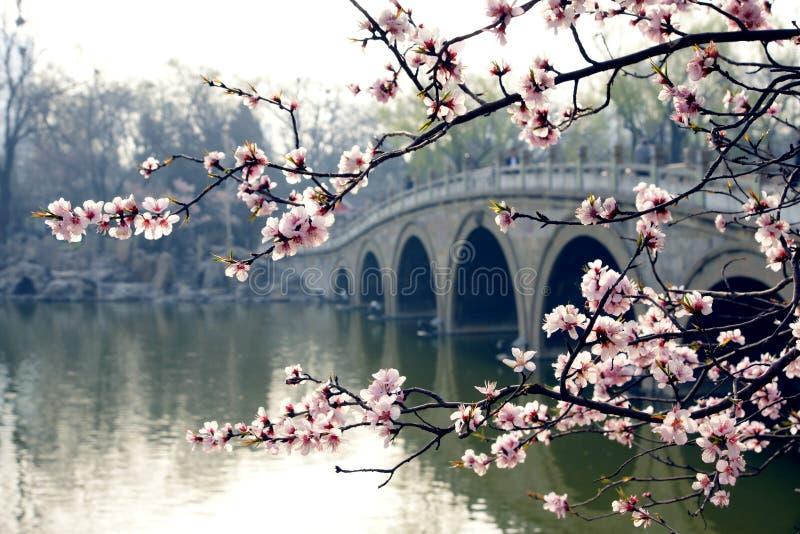 公园春天 免版税库存图片